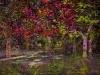 Fairy_Woods.jpg